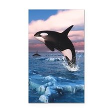 Killer Whales In The Arctic Ocean Rectangle Car Ma