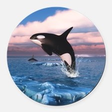Killer Whales In The Arctic Ocean Round Car Magnet