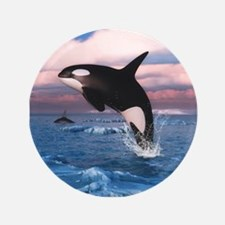 """Killer Whales In The Arctic Ocean 3.5"""" Button"""