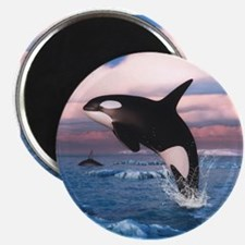 Killer Whales In The Arctic Ocean Magnets