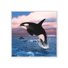 Killer Whales In The Arctic Ocean Sticker