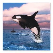 Killer Whales In The Arctic Ocean Square Car Magne
