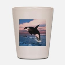 Killer Whales In The Arctic Ocean Shot Glass