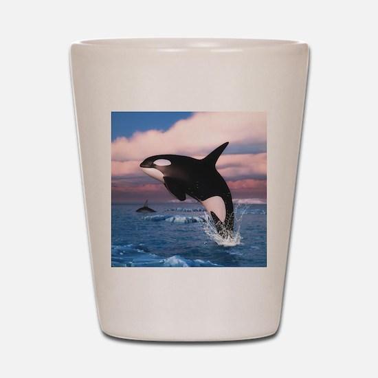 Killer Whales In The Arctic Ocean Shot Glass