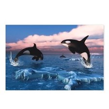 Killer Whales In The Arctic Ocean Postcards (Packa