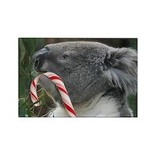 Christmas Koala Candy Cane Magnets