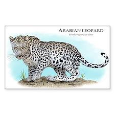 Arabian Leopard Decal