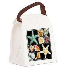 Seashells & Starfish  Canvas Lunch Bag