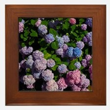 purple, blue, and pink hydrangeas Framed Tile