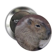 "Capybara 2.25"" Button (10 pack)"