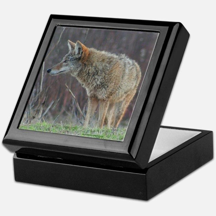 Wild Coyote Keepsake Box