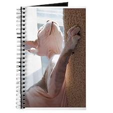 Georgie The Sphynx - George Hairlesson Journal