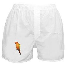 Sun Conure Boxer Shorts