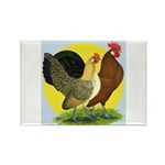 Red Quill Chickens Rectangle Magnet (100 pack)