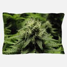 Blooming Bud Pillow Case