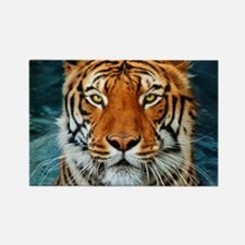Tiger in Water Photograph Magnets