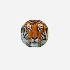 Tiger in Water Photograph Mini Button (10 pack)