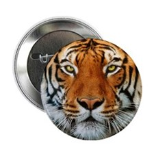 "Tiger in Water Photograph 2.25"" Button"
