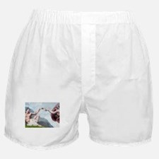 Creation / Maltese and Poodle Boxer Shorts