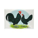 Black Dutch Bantams Rectangle Magnet (100 pack)