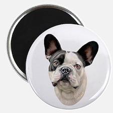 French Bulldog BW Bust Magnet