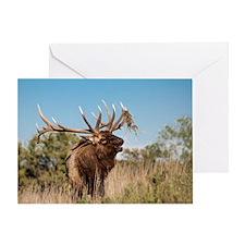 Bull Elk Calling Greeting Cards