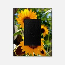 Sunflowers Old Town Albuquerque Picture Frame