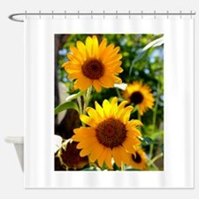 Sunflowers Old Town Albuquerque Shower Curtain