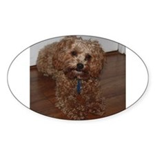Schnoodle Bumper Stickers