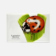 Ladybug Beetle Rectangle Magnet