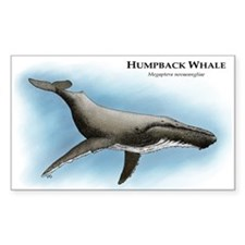 Humpback Whale Rectangle Decal
