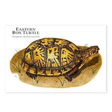 Eastern Box Turtle Postcards (Package of 8)