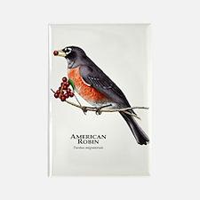 American Robin Rectangle Magnet