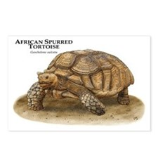 African Spurred Tortoise Postcards (Package of 8)