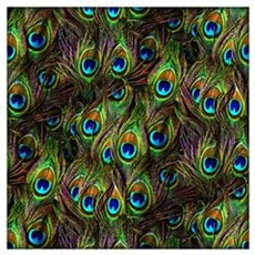 Peacock Feathers Invasion Wall Art Poster
