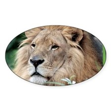Lion010 Decal