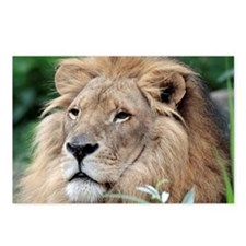 Lion010 Postcards (Package of 8)