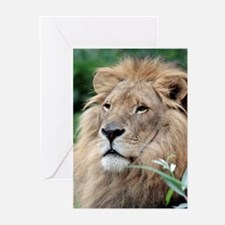 Lion010 Greeting Cards