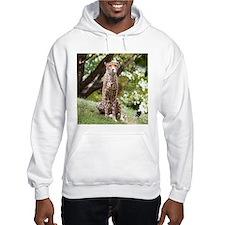 Watching Cheetah Hoodie