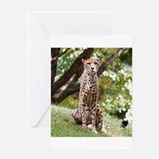 Watching Cheetah Greeting Cards