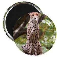 Watching Cheetah Magnets