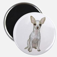 Chihuahua (w) Magnet Magnets