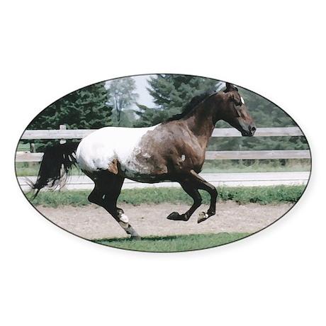 Appaloosa Galloping Oval Sticker