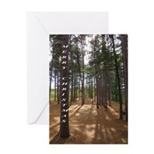 Pines in sun Greeting Cards