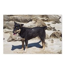 Beach Puppy Postcards (package Of 8)