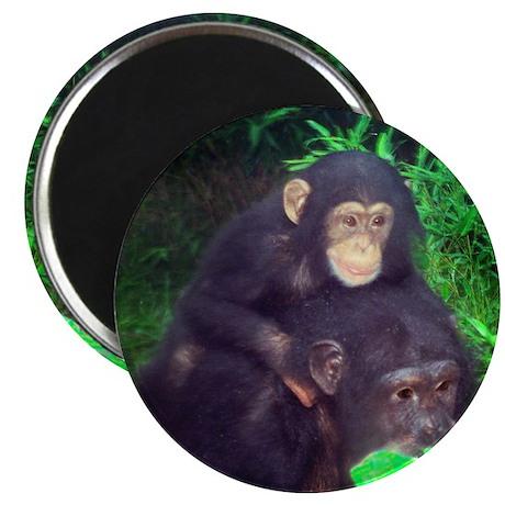 Piggyback Chimp Magnet