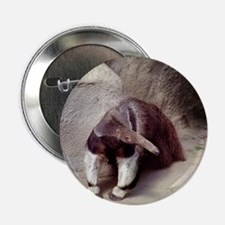 Giant Anteater Nose Button