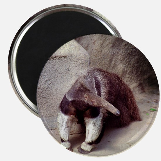 Giant Anteater Nose Magnet