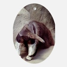 Giant Anteater Nose Oval Ornament