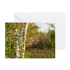 White Birch Greeting Card